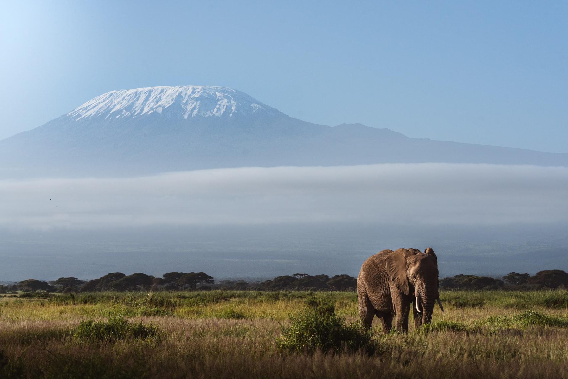 un éléphant dans la savane devant un volcan