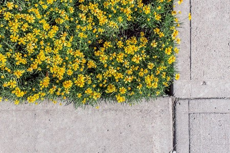 parterre de fleurs en ville
