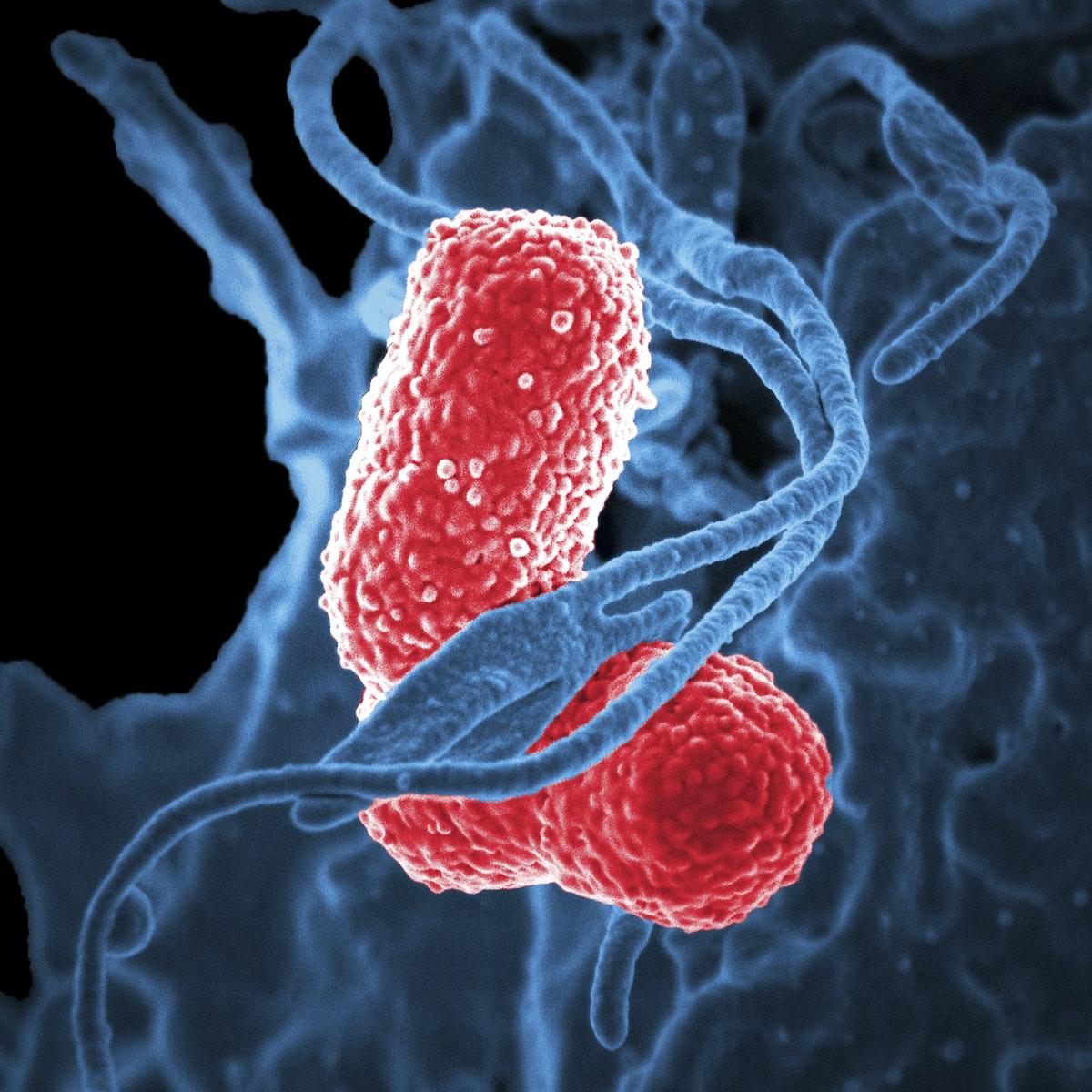 observation au microscope d'un virus dans le corps humain