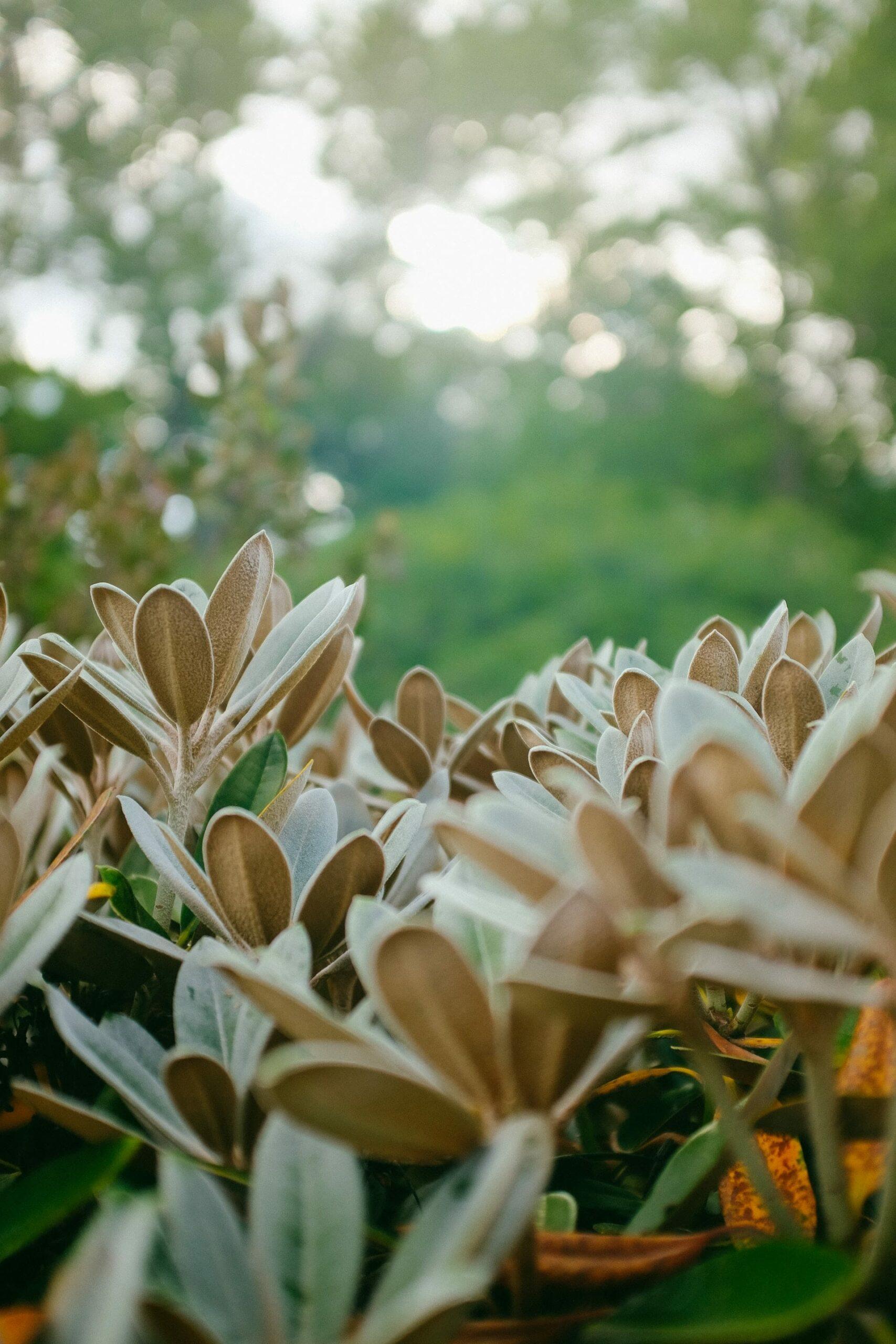 des plantes dans un jardin botanique d'études biologiques